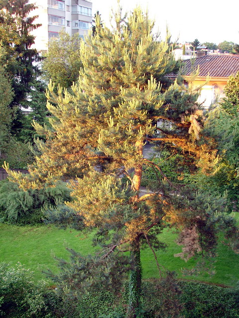wetterbaum.jpg