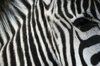 Zur Entspannung der Monitor-geplagten Augen ein hübsches, völlig themenfremdes Motiv, welches ich im Walter Zoo in Gossau geknippst habe.