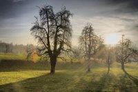 Durchdringende Sonnenstrahlen - Diese HDR-Aufnahme zeigt Obstbäume in schwindenden Nebelschwaden, welche von zarten Sonnenstrahlen durchdringt werden.