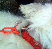 Der Hund mit Netzwerk-Anschluss...