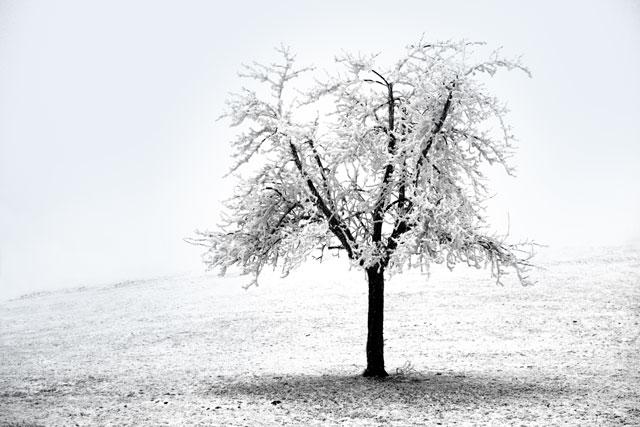 Die Kälte und der Nebel packt die Natur in ihren weissen Schleier...